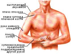 viv-1.jpg